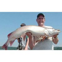 A super fat mid-summer metro Musky that Measured 52