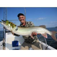 Larry Dahlberg with a mid-forty inch Musky out of Mille Lacs