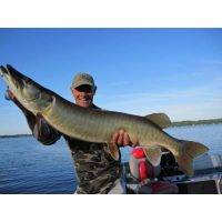 Larry Dahlberg with a thick Musky caught with a Rover lure from River2Sea