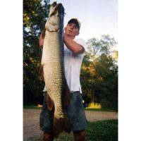 """52\"""" state record tiger musky landed in 1999"""
